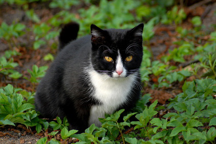 cat_in_grass